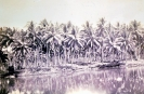 Ron Scott Collection :: Coconuts at Finschaven N.G.